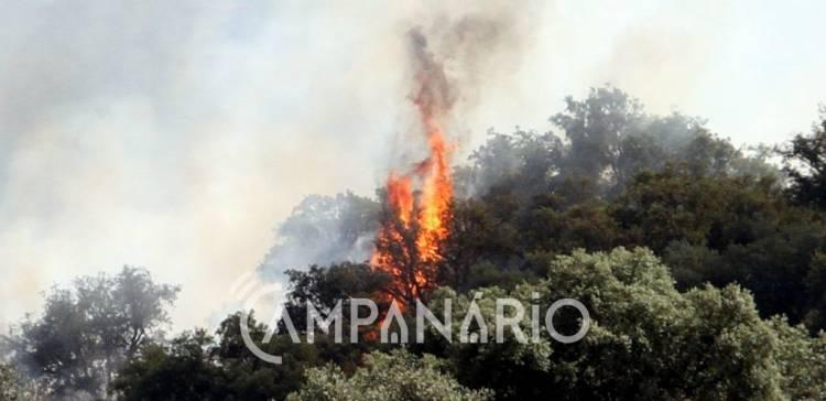 Incêndio próximo de Rio de Moinhos (Borba) mobilizou mais de três dezenas de bombeiros de cinco corporações (c/fotos)