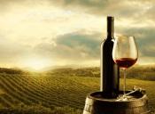 Vinhos do Alentejo vão lançar certificação de produção sustentável