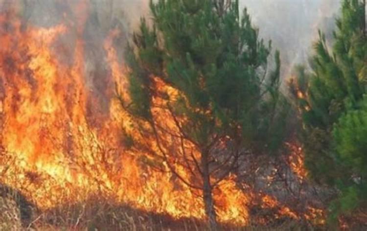 Meio aéreo combate incêndio no Baixo Alentejo