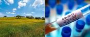 COVID-19/Dados DGS: Alentejo contabiliza mais 11 infetados