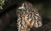 Mértola lança Workshop Night Birdwatching, com inscrições gratuitas até 30 de abril
