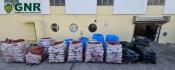 GNR aprende mais 14 toneladas de ameijoa japonesa em Montemor-o-Novo