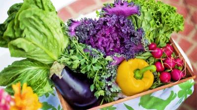 Dia da Gastronomia Sustentável comemorado em Montemor-o-Novo