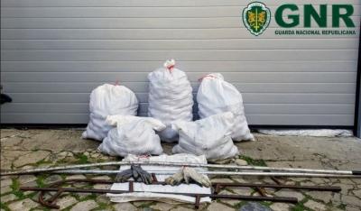 GNR de Sines volta a realizar 2 detenções por furto de pinhas