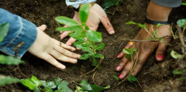 Gavião promove ações de reflorestação do concelho fustigado pelos incêndios