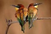 Elvas - Formação sobre ornitologia já no próximo dia 10