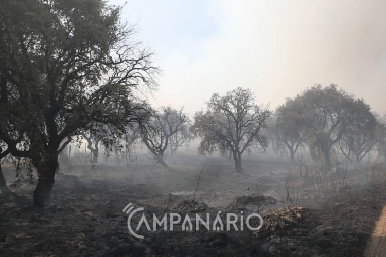 Fumo e cheiro a queimado no Alentejo vem dos incêndios de Castelo Branco