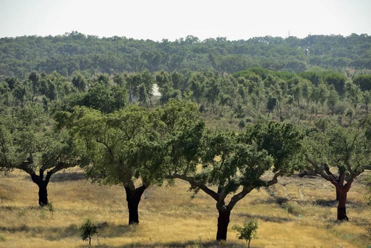 Abertas candidaturas a 20 milhões de euros para reforço da defesa da floresta