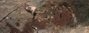 Abrigo artificial de Alqueva acolhe cerca de 6 000 morcegos de espécies ameaçadas