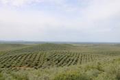 Sousel: Ação de Sensibilização Operação Floresta Segura 2020 realiza-se dia 2 de março
