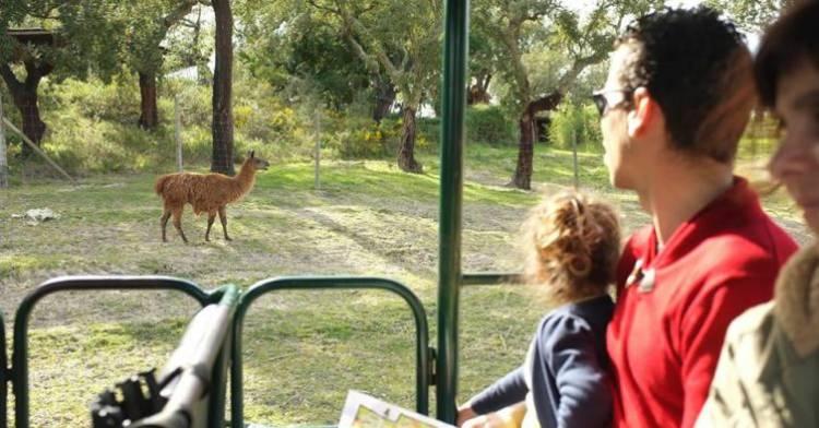 Monte Selvagem - Um Safari no Alentejo