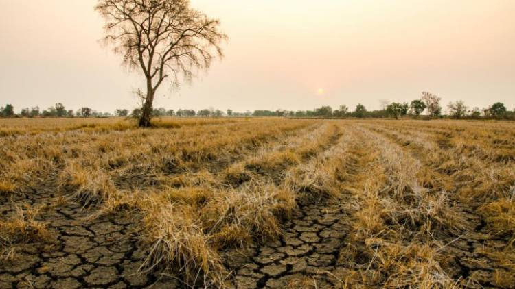 IPMA aponta insuficiência da precipitação para os próximos dias no alívio da seca extrema