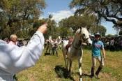 Benção do Gado - Ritual tradicional volta a Santo Amaro já no sábado (Sousel)