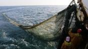 """Nova aplicação """"Pesca em Portugal"""" desenvolvida por várias entidades alentejanas"""