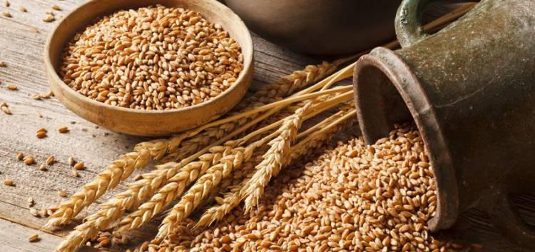 Ministro da Agricultura em Monforte para lançar a nova marca 'Cereais do Alentejo'