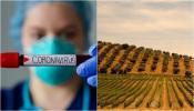 COVID-19/Dados DGS: Mais um dia sem mortes no Alentejo e com mais 36 casos de infeção