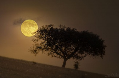 Lua dourada nasce no céu dos campos do Alqueva