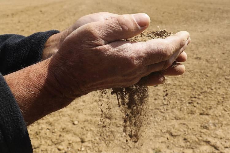 Agricultores do Baixo Alentejo pedem  medidas excecionais