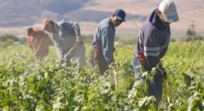 Portalegre é um dos distritos com mais representatividade no tráfico para exploração laboral!