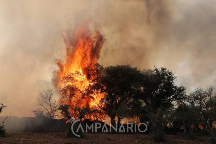 """Incêndios agrícolas consumiram """"cerca de 100 hectares de pasto"""" no distrito de Évora, este fim de semana (c/som)"""