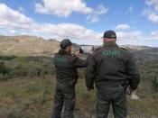 Monforte: Corte ilegal de cerca de 3.000 azinheiras detetado pela Equipa de Proteção Florestal. Guardas-florestais queixam-se da GNR