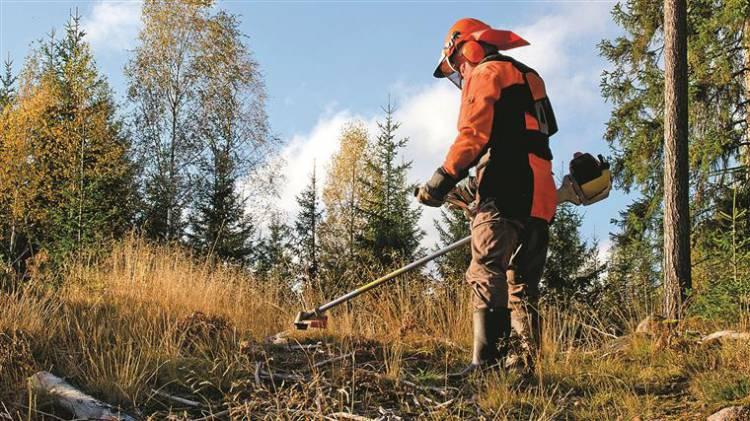 Conheça as 41 freguesias alentejanas na lista prioritária para limpeza de terrenos