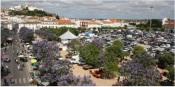 Semana Europeia do Desporto promove várias atividades em Estremoz