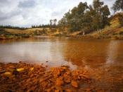 Mina de S. Domingos: eucaliptos vão dar lugar a azinheiras, medronheiros e uma central solar