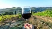 """Alentejo:Nova temporada do programa """"The Wine Show"""" destaca vinho alentejano ecortiça"""