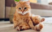 Alandroal: Câmara Municipal promove campanha de esterilização para gatos