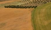 Procura de terrenos em Beja e Portalegre mais do que duplicou