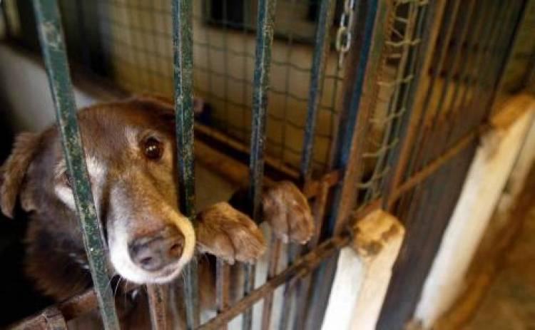 Canil Intermunicipal da Resialentejo duplica capacidade devido a lei de proibição de abate de animais, diz dirigente (c/som)