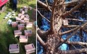 Colocados 20 ninhos para chapim-azul na Serra D'Ossa