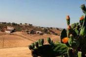 Electricidade chega a mais 25 casas e explorações agrícolas na Serra de Serpa