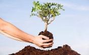 """Borba: Caminhada """"Cultivando a Compaixão"""" promove o contacto com a Natureza e a plantação de árvores"""