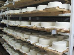Suspensão de actividade e apreensão de queijos  no concelho de Borba