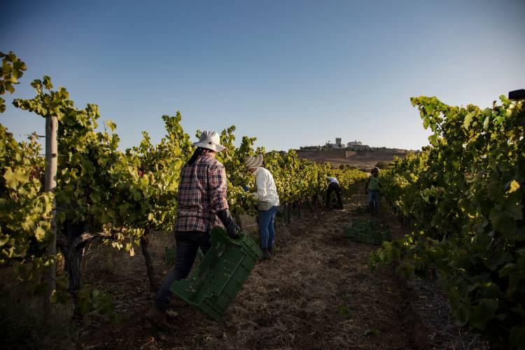 Vinhos de Estremoz e Sousel entre os 100 melhores da Wine Enthusiast