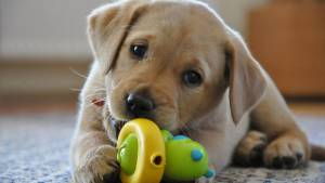 Alentejo regista menor número de animais recolhidos e adotados no país (c/dados)