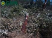 Grândola: GNR deteta abate ilegal de cerca de 300 sobreiros