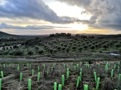Com o intuito de recuperar os danos causados pelos incêndios Vinhos do Alentejo contribuem para a reflorestação