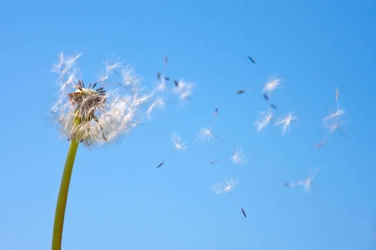 Alentejo com níveis elevados de pólen na atmosfera até ao fim do mês