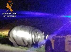 Guarda de Espanha captura hipopótamo próximo da fronteira com o Alentejo