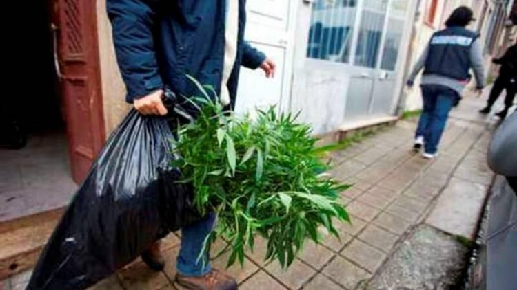 2cidadãos detidos em Estremoz por cultivo de estupefacientes (c/som)