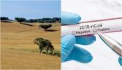 Sobe para 41 pessoas infetadas, em 4 concelhos do Alentejo segundo o relatório da DGS