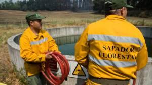 Comunidade Intermunicipal do Alto Alentejo abre concurso para 14 Sapadores Florestais