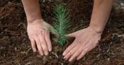 Eurocidade Badajoz, Elvas e Campo Maior assinala Dia da Cooperação Europeia com a plantação de árvores
