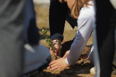 Alcácer do Sal: Crianças plantam árvores para assinalar Dia Mundial da Árvore e Dia Internacional das Florestas (c/fotos)