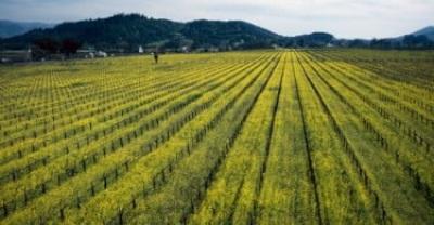 Confederação dos Agricultores Portugueses denuncia atrasos no pagamento de medidas agro-ambientais