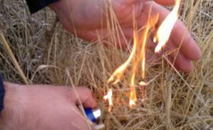Homem de 43 anos detido a atear fogo no Baixo Alentejo
