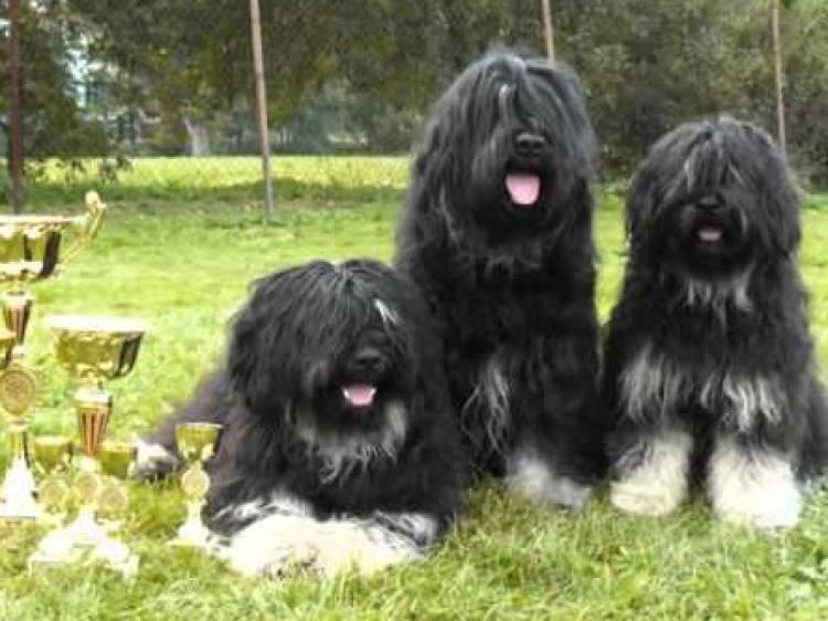 Arronches recebe Exposição Canina Nacional
